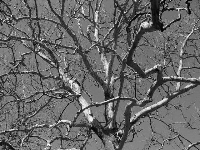 tree-17831_960_720